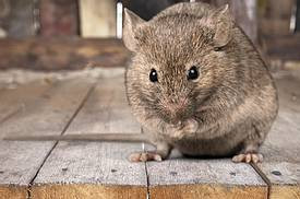 Rodent Proofing Services in South Florida