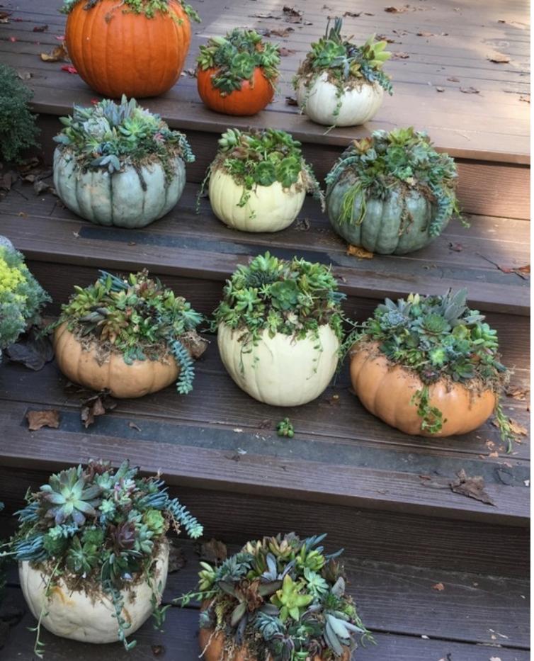 Pumpkin Succulent 10_16.png