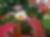 Screen Shot 2018-09-20 at 3.37.47 PM.png