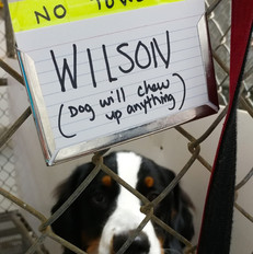 Wilson and his sign