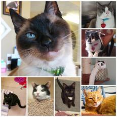 Staff Cats of MPPAH
