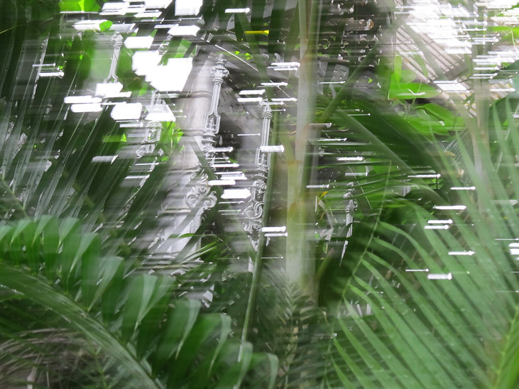 Colour photograph. Blurry palm leaves.