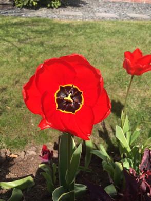 Poppy. Photograph by Belinda Guidi