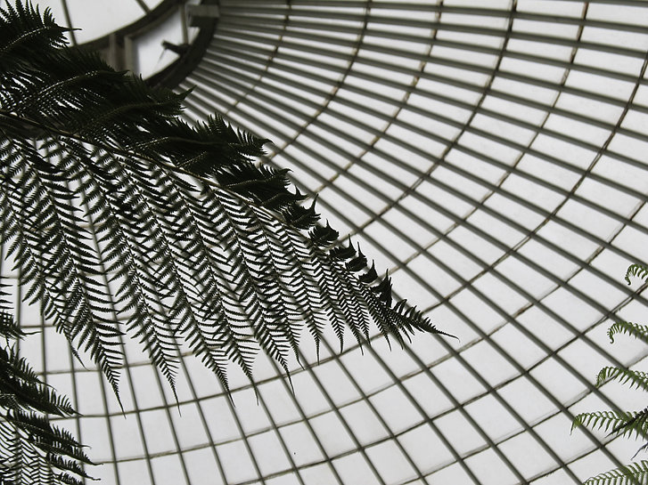 A monochrome photograph withing the glasshouse in the Botanic Gardens (Kibble Palace), in shot is a ferm and the metal and glass roof.