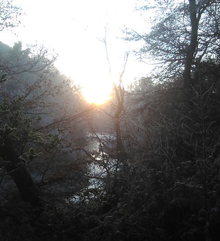 A photograph towards a low sun through a wintery scene of trees and a stream.