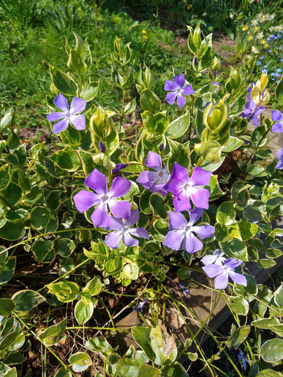 Purple flowers. Photograph by Rebecca Wilcox