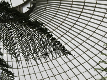 A photograph of palm leaves and the glass and metal roof of Kibble Palace at Glasgow's Botanic Gardens.