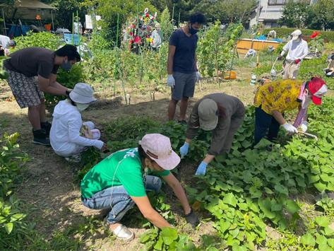 Smile Vegetable Gardening