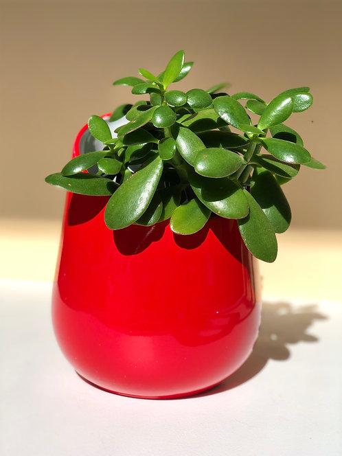 red and white ceramic planter
