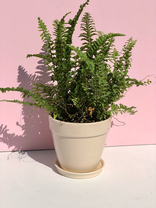 cream ceramic planter with saucer