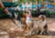 dogs-leashes.jpg