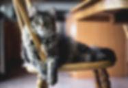 fluffy-kitty.jpg