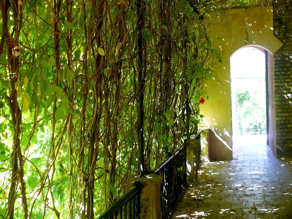 Jardins de l'Alcázar Séville, ESPAGNE