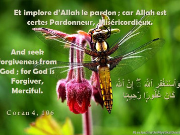 [Le verset du jour] Sourate 4 versets 106 : Et implore d'Allah le pardon ..