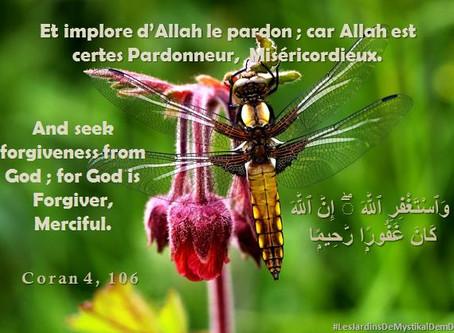 [Le verset du jour] Sourate 4 versets 106 : Et implore d'Allah le pardon ..