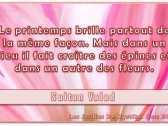 Sultan Valad : Le printemps brille partout de la même façon x Mystikal Dem Dikk