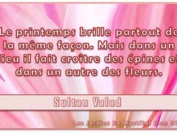 Sultan Valad : Le printemps brille partout de la même façon
