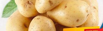 English Potato Per Pound