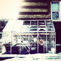 Winter Greenhouse