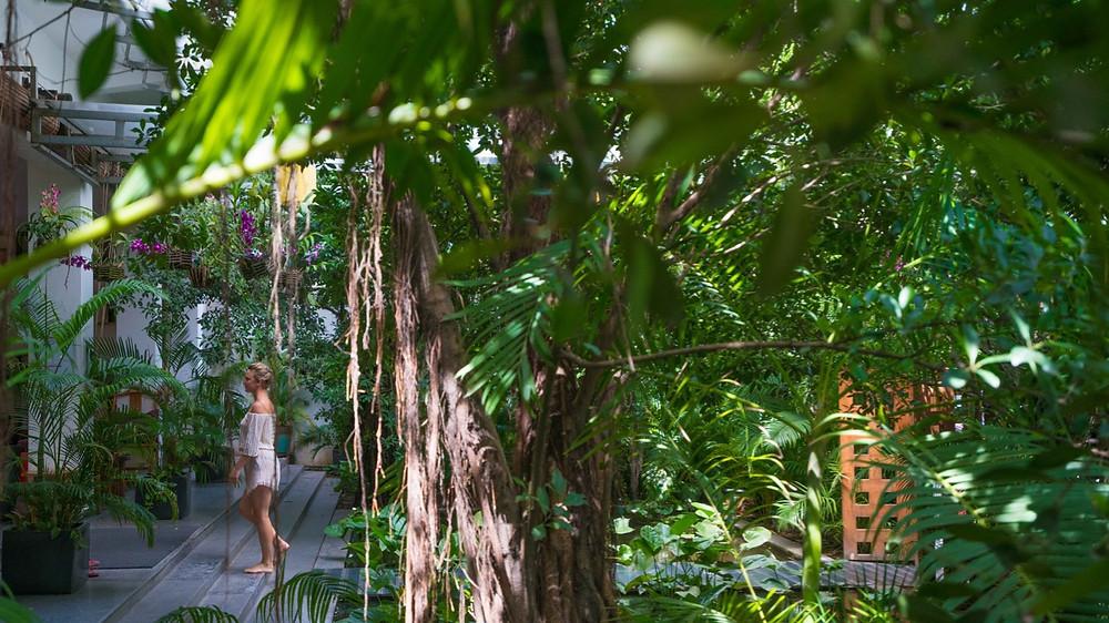 Entrance to Tea House through garden