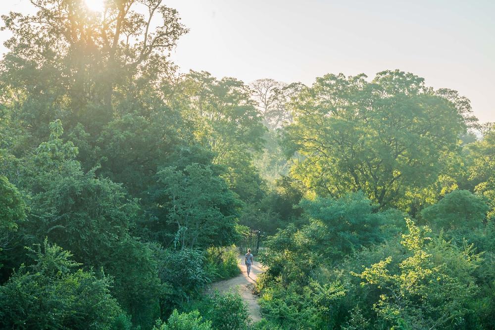 Morning walks at Tree Tops Jungle Lodge