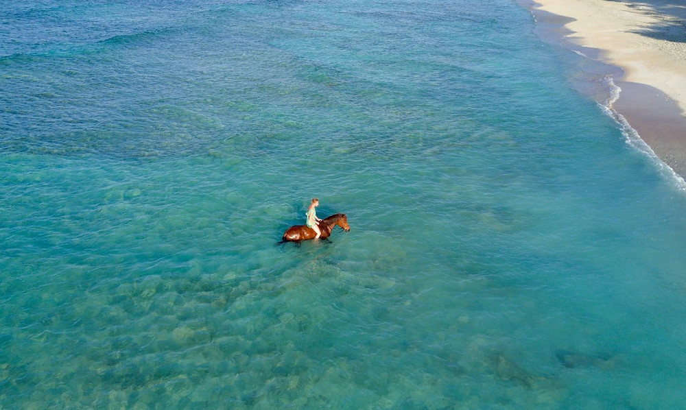 Swimming with horses Gili T, Lombok