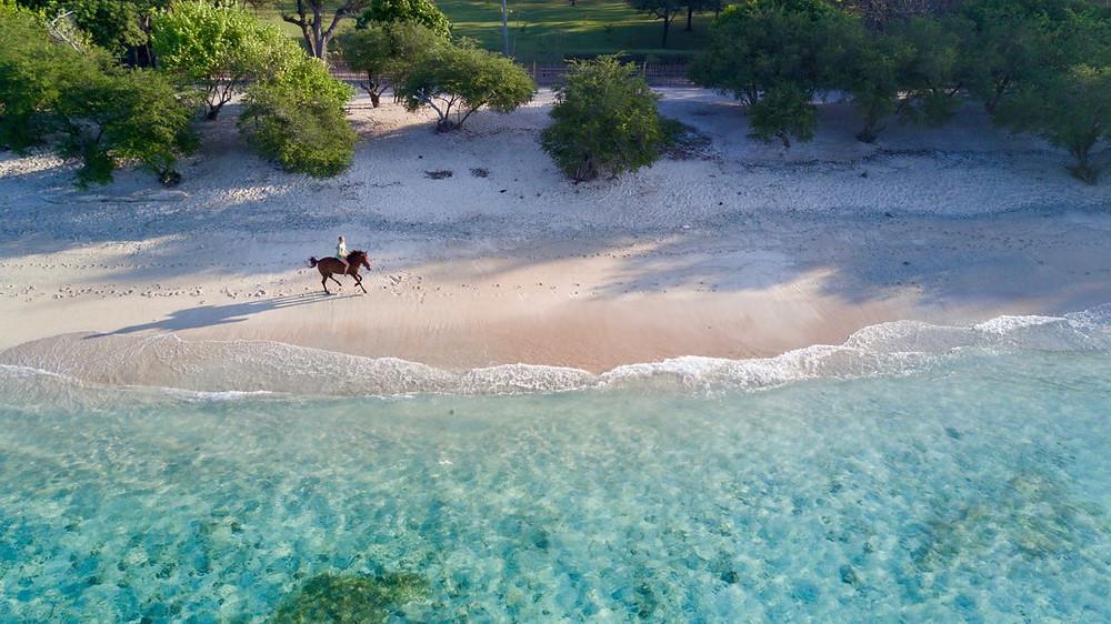 Galloping horse on beach, Gili islands