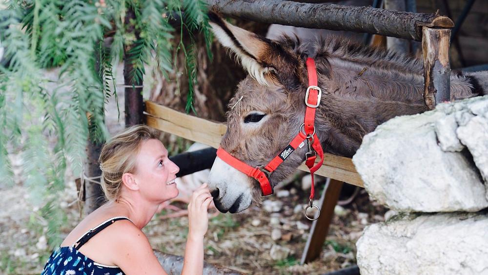 Villa Dei Papiri Donkeys
