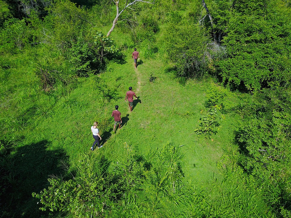 Jungle Walking Safaris in Sri Lanka