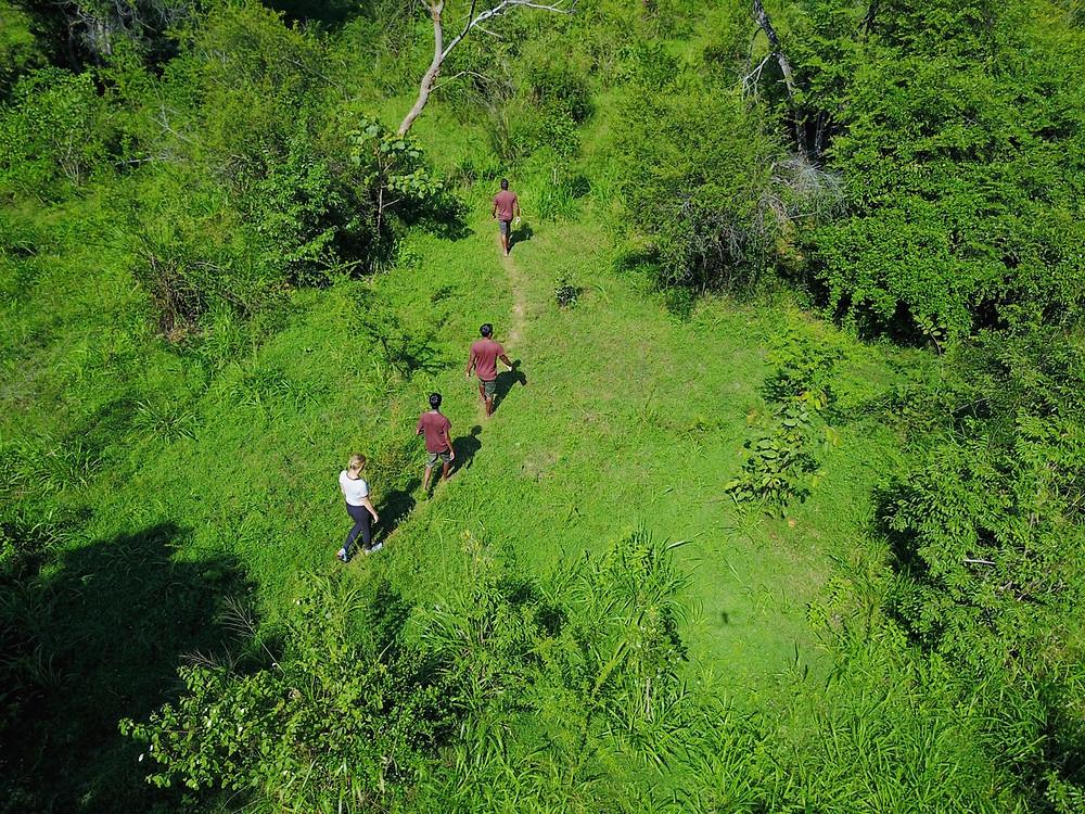Jungle Walking Safaris in Sri Lanka