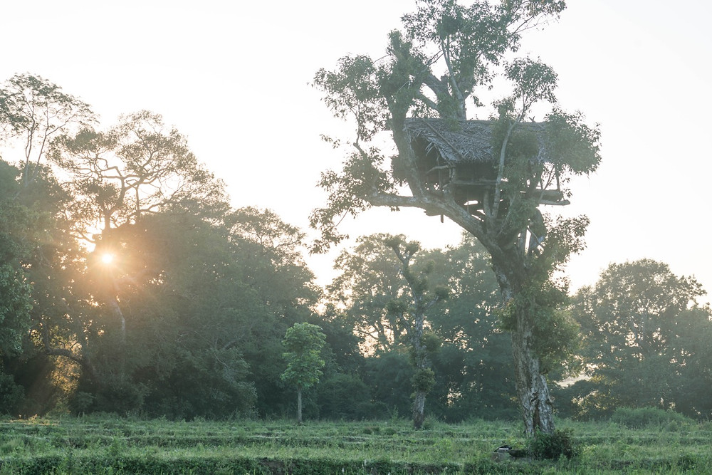 Local Farmers Lookout Perch and Tree House