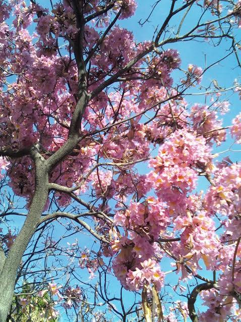 Spring, Pink Joy