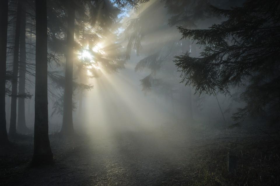 Sunbeam/Pixabay