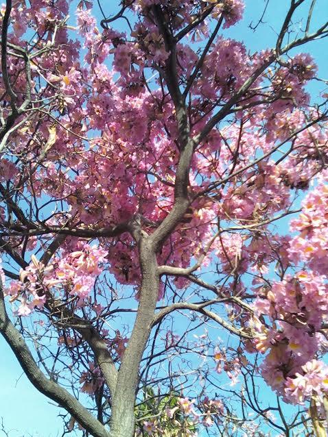 Spring Blossom Fest