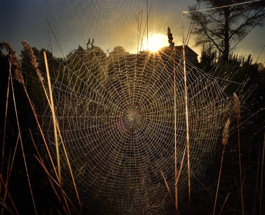 Ryan Hogg/Pixabay/Spider Web