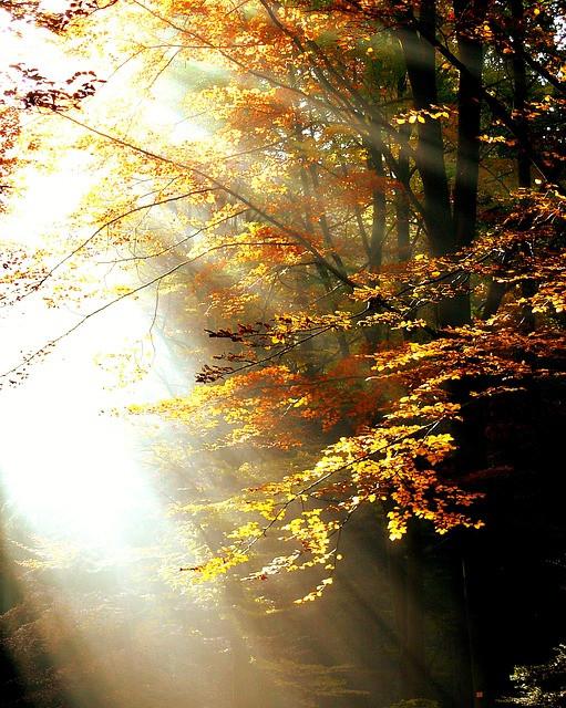 Forest/Pixabay