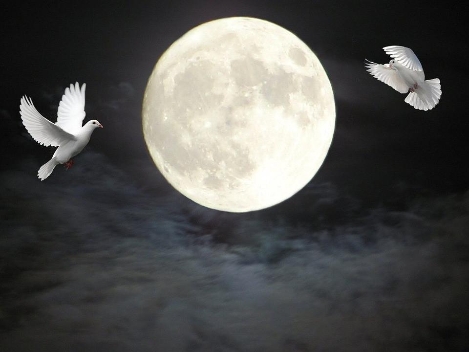 doves, moon