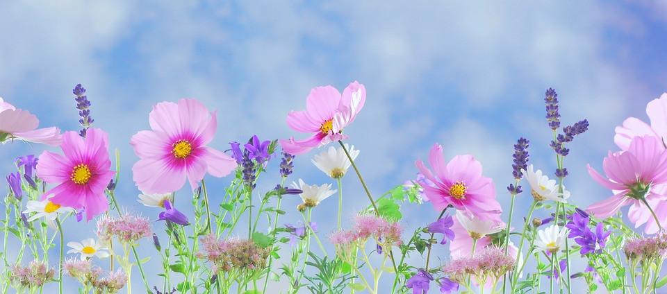 Wild-Flowers/Pixabay