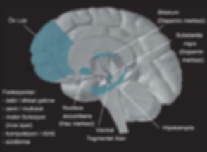 istanbul ankara izmir tedavi neurofeedback psikiyatri
