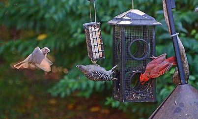 3 birds feeder.jpg