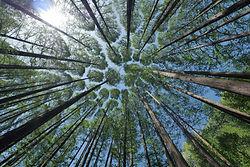tree-4450514_1920.jpg