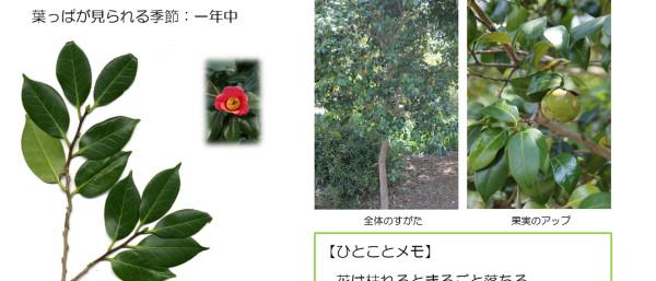 37_2.jpg