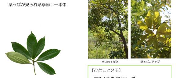 34_2.jpg