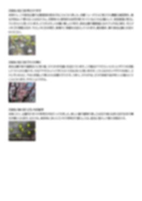 副館長ブログ2006-12_ページ_001.jpg
