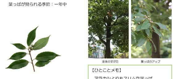 26_2.jpg