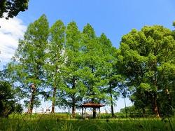 乳母ヶ谷公園