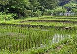 2011_07_02_010_田んぼ.jpg