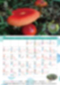 8月自然暦.jpg