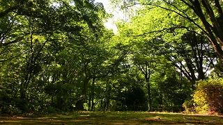 三本松緑地