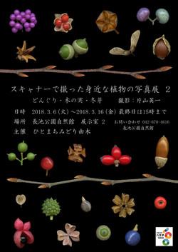 スキャナーで撮った身近な植物の写真展2